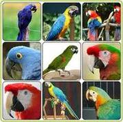 hand raised parrots and fertile eggs for sale