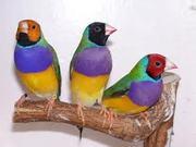 East of England Bird Sale (Norwich)